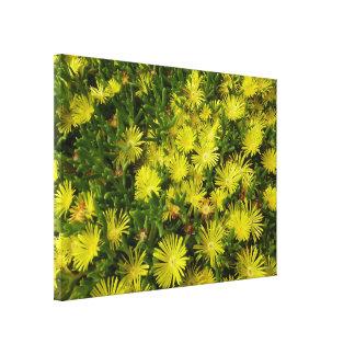 Golden Ice Plant Yellow Flowers Canvas Prints