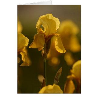 Golden Iris Notecard Note Card