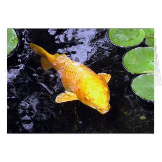 Golden Koi Fish Photo Card