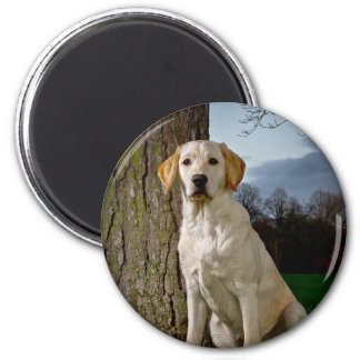 golden Labrador 6 Cm Round Magnet