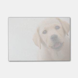 Golden Labrador Puppy (8 Months Old) Post-it Notes