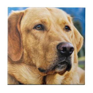 Golden Labrador Retriever Tile