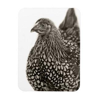 Golden Laced Wyandotte Chicken Flexible Magnets