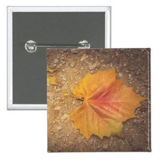 Golden leaf button