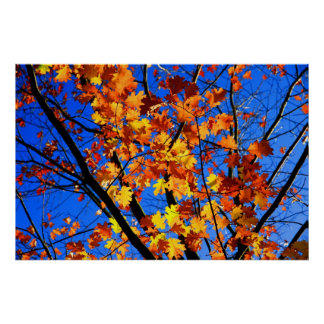 Golden Leaves of Autumn Print