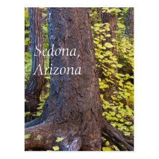 Golden leaves on the west fork trail postcard