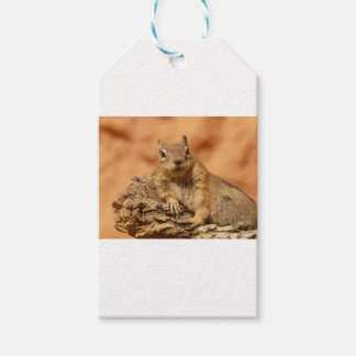Golden Mantled Ground Squirrel Gift Tags