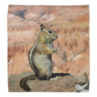 Golden Mantled Ground Squirrel Head Kerchiefs