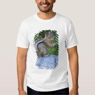 Golden Mantled Ground Squirrel Tee Shirts