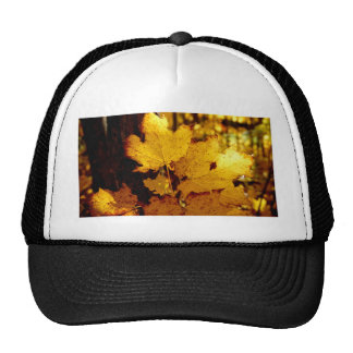 Golden Maple Leaves on St Joseph Island Cap