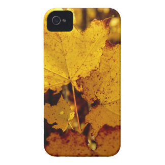 Golden Maple Leaves on St Joseph Island iPhone 4 Covers