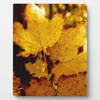 Golden Maple Leaves on St Joseph Island Plaque
