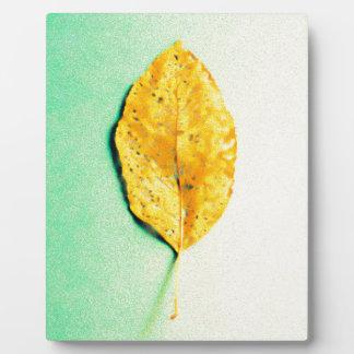 Golden Mint by JP Choate Plaque