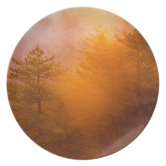 Golden Morning Glory Forest Plate