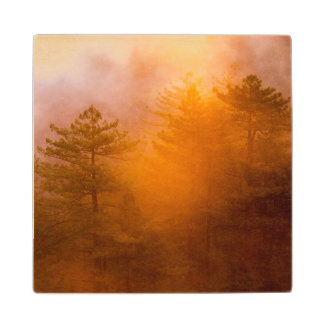 Golden Morning Glory Forest Wood Coaster