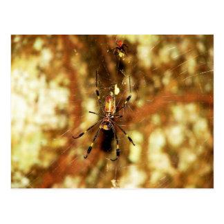 Golden Orb Spider Isla Barro Colorado, Panama Postcard