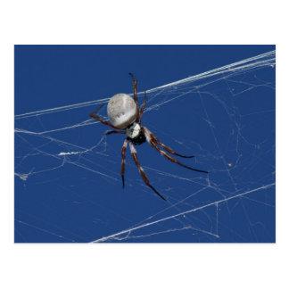 Golden Orb Spider Postcard