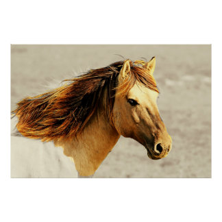 Golden Palomino Horse in the Sunlight Poster
