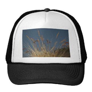 Golden Plant on Dark Sky Hat