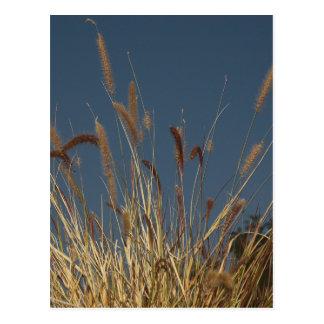 Golden Plant on Dark Sky Postcard
