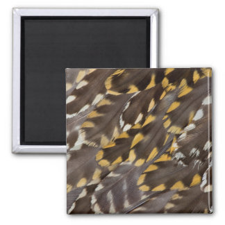Golden Plover Feathers Magnet