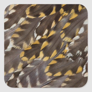 Golden Plover Feathers Square Sticker