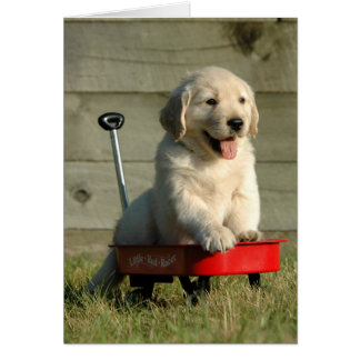 Golden Puppy and Red Wagon Greeting Card