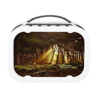 Golden Rays of Light Lunchbox