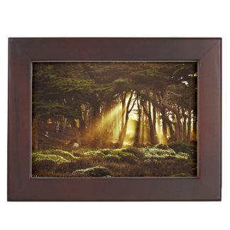 Golden Rays of Light Memory Box
