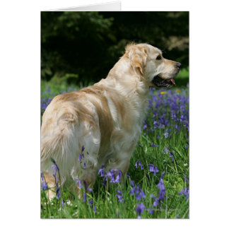 Golden Retreiver in Flowers Greeting Card