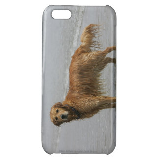 Golden Retreiver in the Sea iPhone 5C Covers