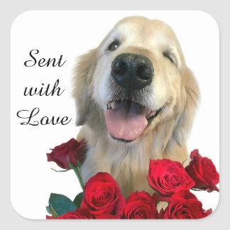 Golden Retriever and Roses Sent With Love Square Sticker