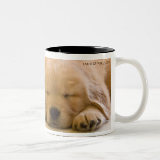 Golden Retriever Babies Two-Tone Coffee Mug