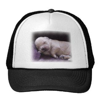 Golden Retriever Baby Puppy Trucker Hat