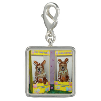 Golden Retriever Chocolate Rabbits in Boxes