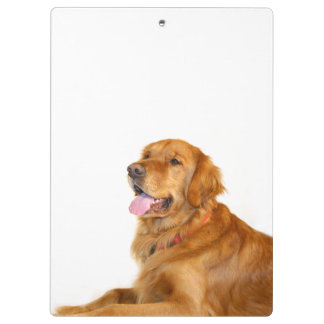 Golden retriever clipboard