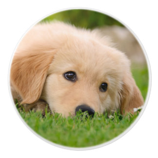 Golden Retriever Cute Puppy Dreaming - Decorative Ceramic Knob