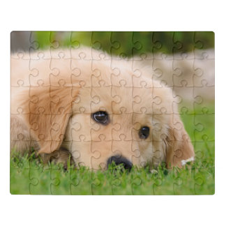 Golden Retriever Cute Puppy Dreams Dog Head Photo Jigsaw Puzzle