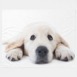 Golden retriever cute puppy lying down fleece blanket