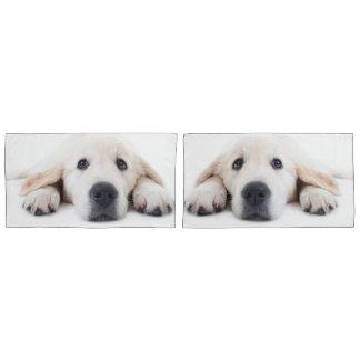 Golden retriever cute puppy lying down pillowcase
