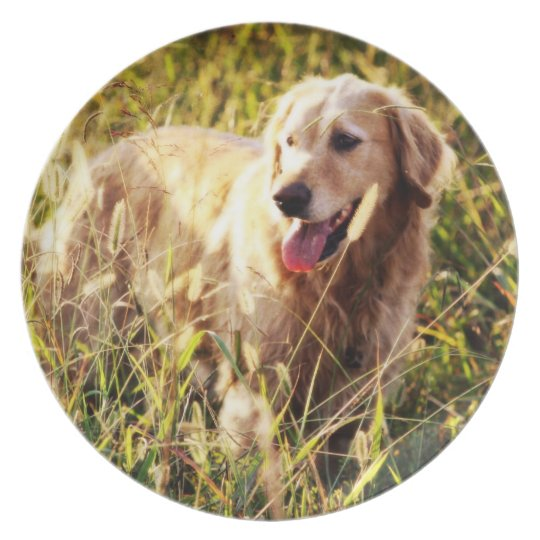 Golden Retriever Dog Plate