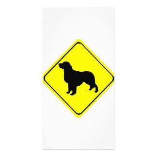 Golden Retriever Dog Silhouette Crossing Sign Photo Card