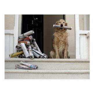 Golden retriever dog sitting at front door postcard