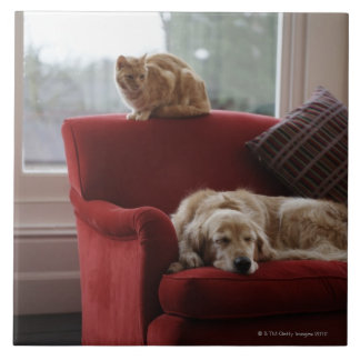 Golden retriever dog with ginger tabby cat large square tile