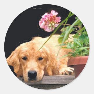 Golden Retriever Flower Sticker