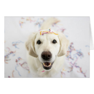 Golden Retriever Happy Birthday Greeting Card