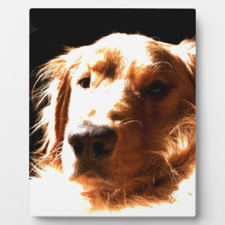 Golden Retriever In Sunlight Plaque