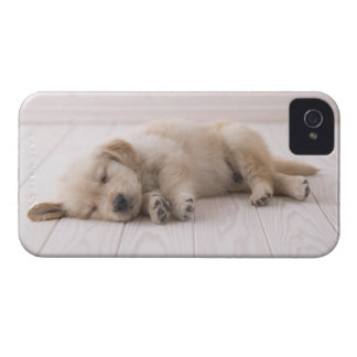 Golden Retriever iPhone 4 Case-Mate Case