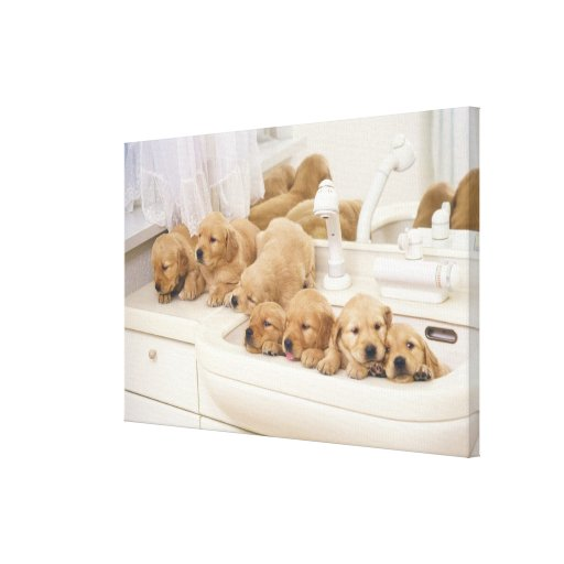 Golden Retriever; is a relatively modern and 3 Stretched Canvas Prints