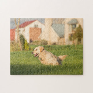 Golden Retriever Jig Saw Puzzle